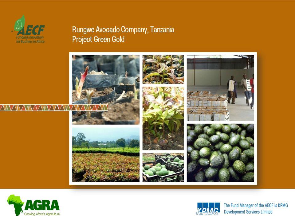 Rungwe Avocado Company, Tanzania Project Green Gold