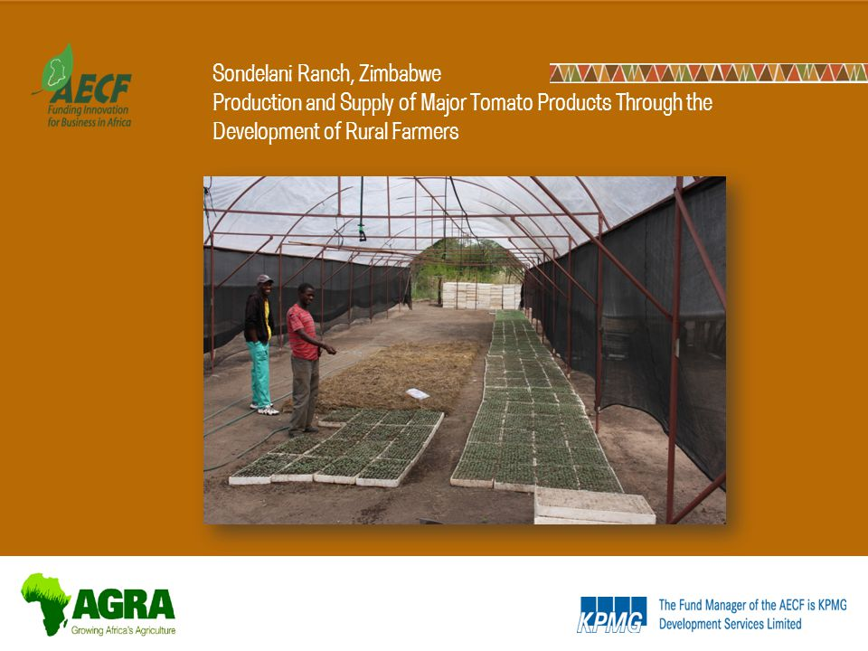 Sondelani Ranch, Zimbabwe Production and Supply of Major Tomato Products Through the Development of Rural Farmers