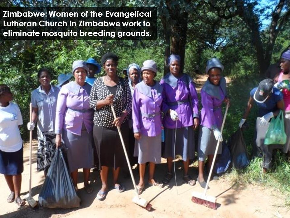 Zimbabwe: Women of the Evangelical Lutheran Church in Zimbabwe work to eliminate mosquito breeding grounds.