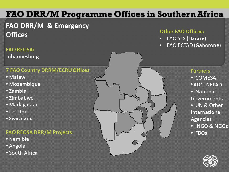 FAO DRR/M & Emergency Offices FAO REOSA: Johannesburg 7 FAO Country DRRM/ECRU Offices Malawi Mozambique Zambia Zimbabwe Madagascar Lesotho Swaziland FAO REOSA DRR/M Projects: Namibia Angola South Africa Partners COMESA, SADC, NEPAD National Governments UN & Other International Agencies INGO & NGOs FBOs Other FAO Offices: FAO SFS (Harare) FAO ECTAD (Gaborone)