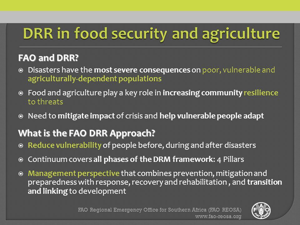 FAO Regional Emergency Office for Southern Africa (FAO REOSA) www.fao-reosa.org FAO and DRR.