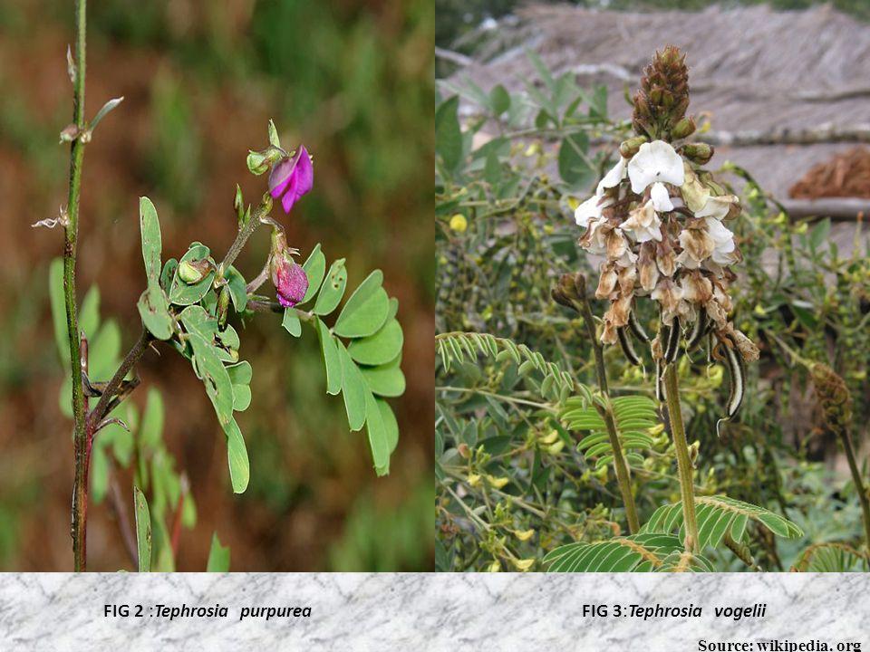 SYSTEMIC CLASSIFICATION Kingdom: Plantae Subkingdom: Tracheobionta Division: Magnoliophyta Class: Magnoliopsida Subclass: Rosidae Order: Fabales Famil