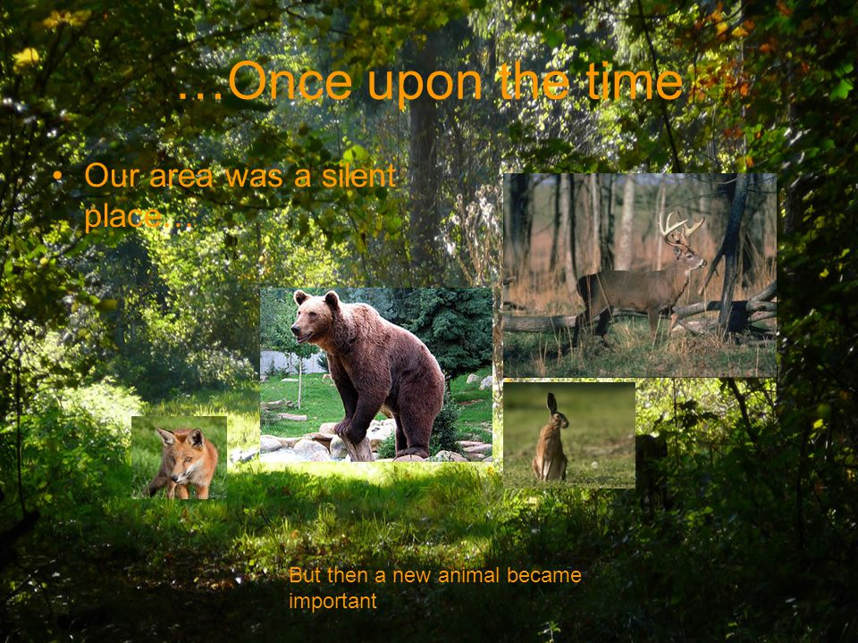 …Once upon the time Our area was a silent place… But then a new animal became important