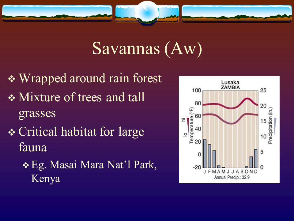 Savannas (Aw)  Wrapped around rain forest  Mixture of trees and tall grasses  Critical habitat for large fauna  Eg. Masai Mara Nat'l Park, Kenya
