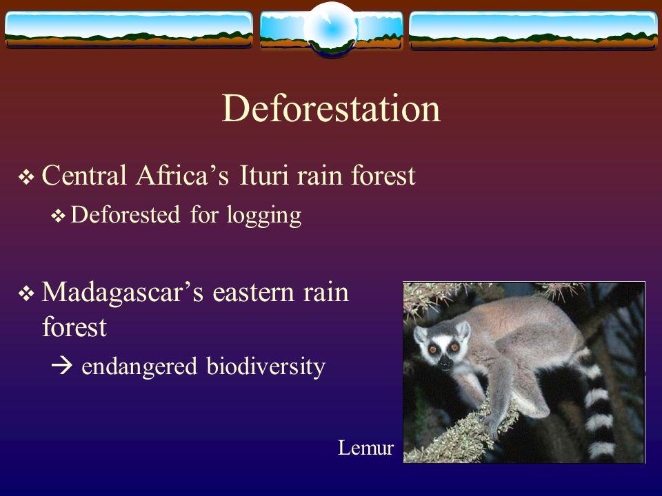 Deforestation  Central Africa's Ituri rain forest  Deforested for logging  Madagascar's eastern rain forest  endangered biodiversity Lemur
