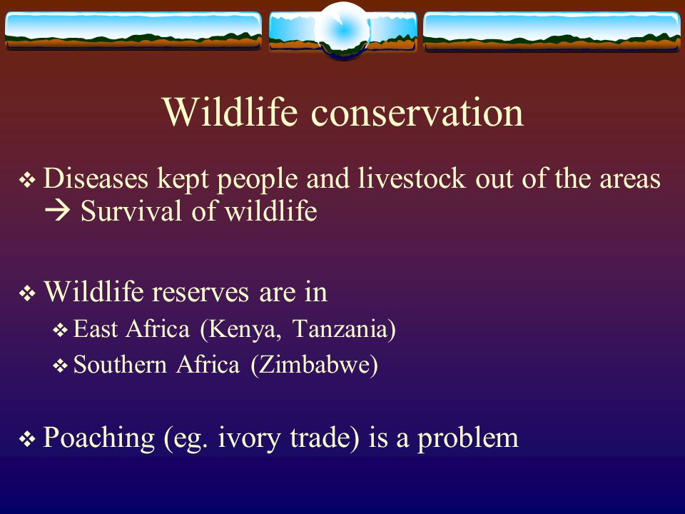 Wildlife conservation  Diseases kept people and livestock out of the areas  Survival of wildlife  Wildlife reserves are in  East Africa (Kenya, Ta