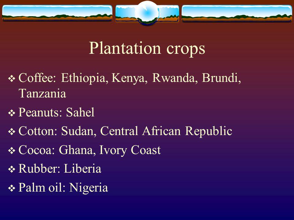 Plantation crops  Coffee: Ethiopia, Kenya, Rwanda, Brundi, Tanzania  Peanuts: Sahel  Cotton: Sudan, Central African Republic  Cocoa: Ghana, Ivory