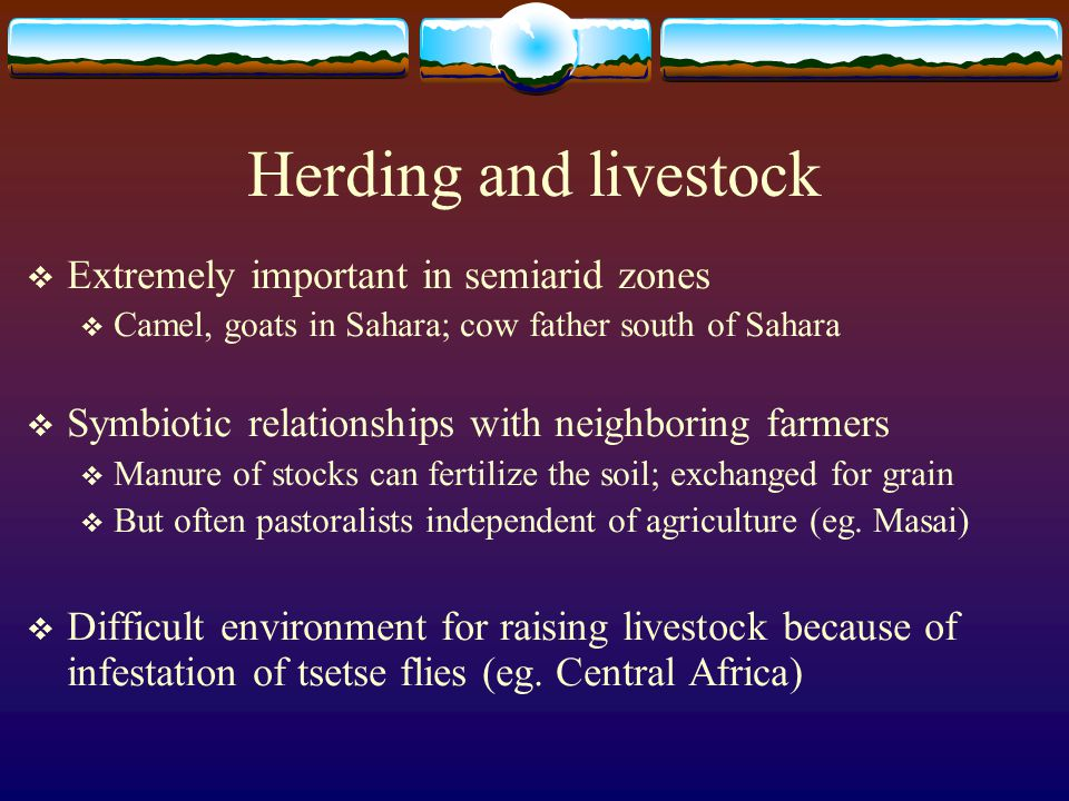 Herding and livestock  Extremely important in semiarid zones  Camel, goats in Sahara; cow father south of Sahara  Symbiotic relationships with neig