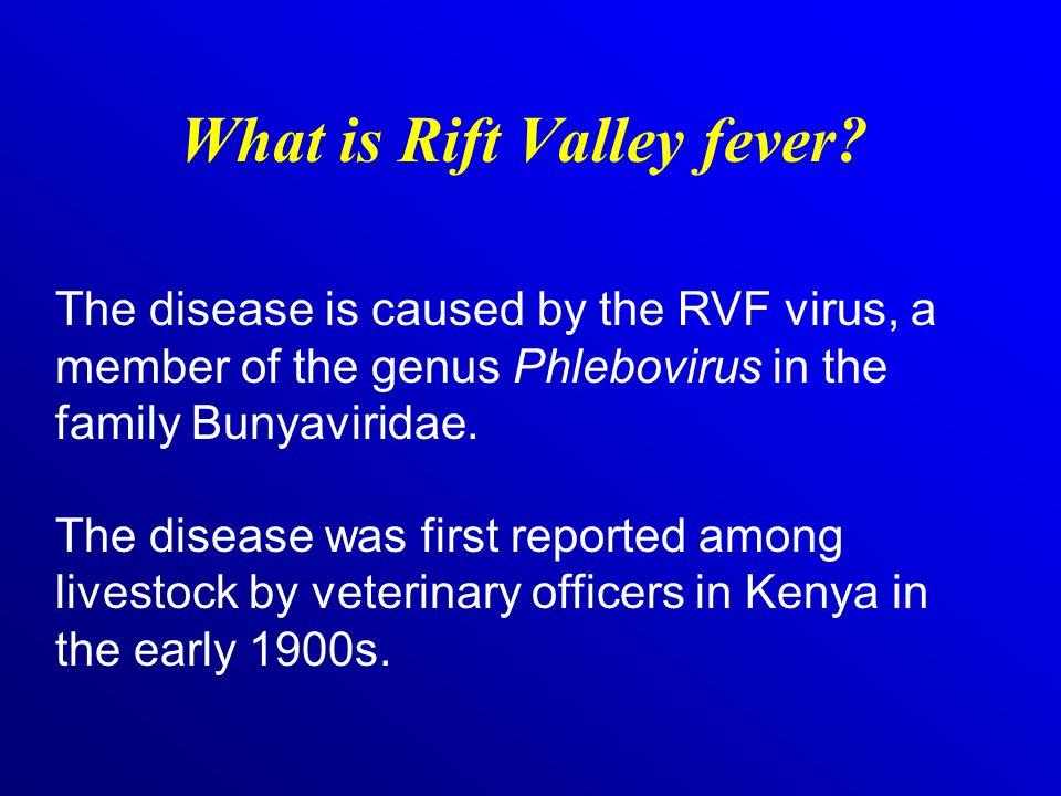 How is RVF virus spread among animals.