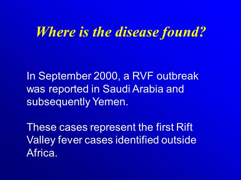 How do humans get RVF.