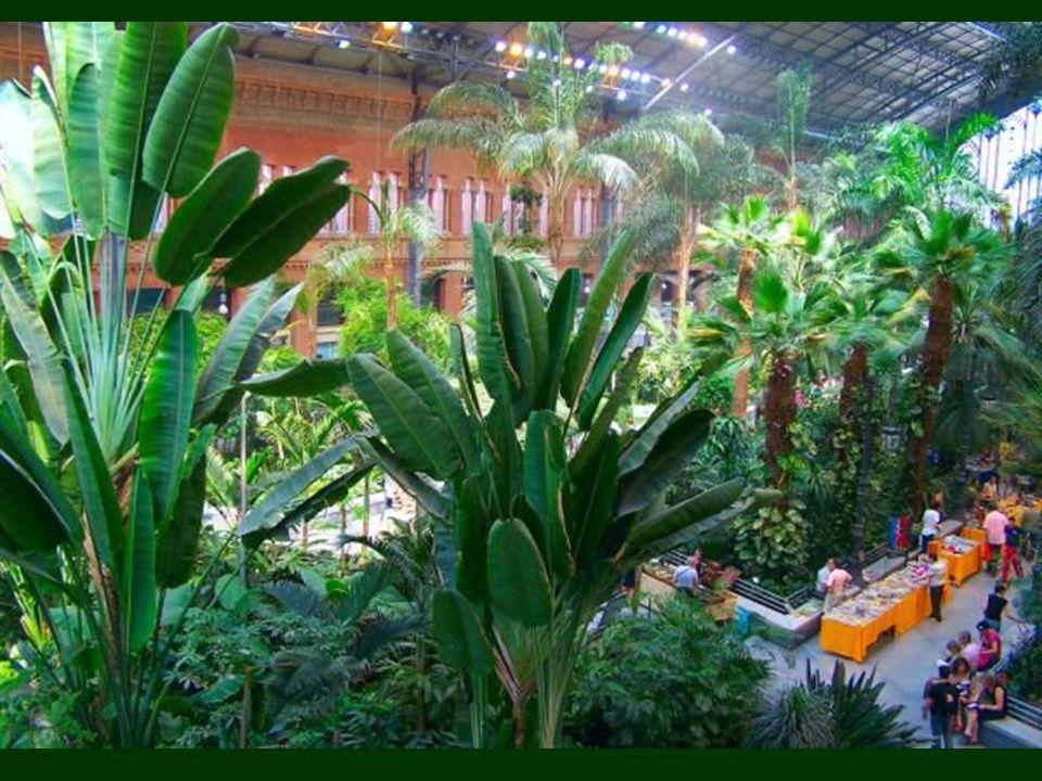 Această grădină tropicală de 4000 de metri pătraţi este un loc de inspiraţie.