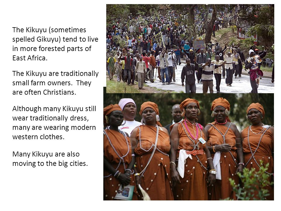 The Kikuyu (sometimes spelled Gikuyu) tend to live in more forested parts of East Africa. The Kikuyu are traditionally small farm owners. They are oft