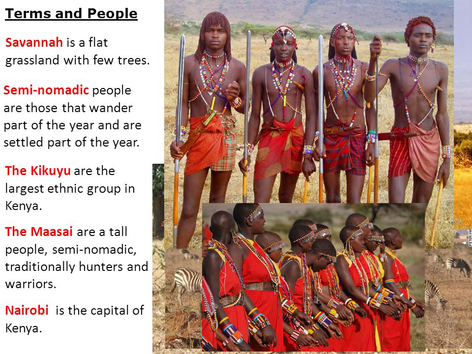 Terms and People Savannah is a flat grassland with few trees. The Kikuyu are the largest ethnic group in Kenya. The Maasai are a tall people, semi-nom