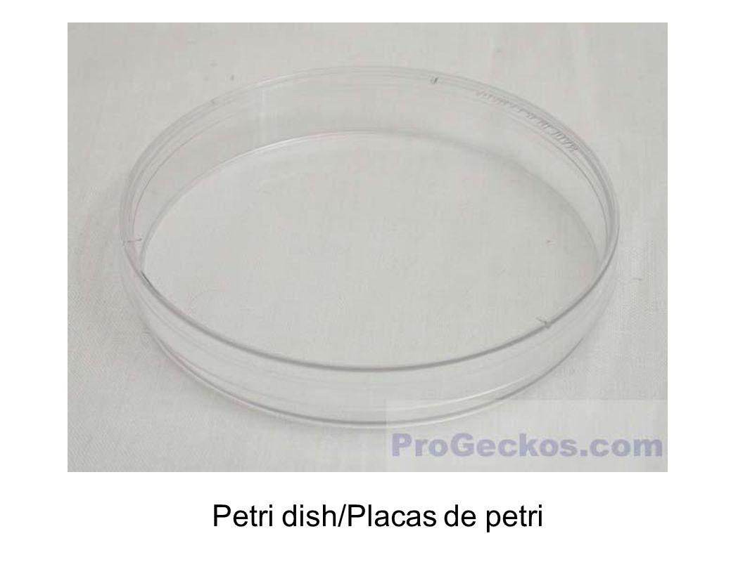 Petri dish/Placas de petri