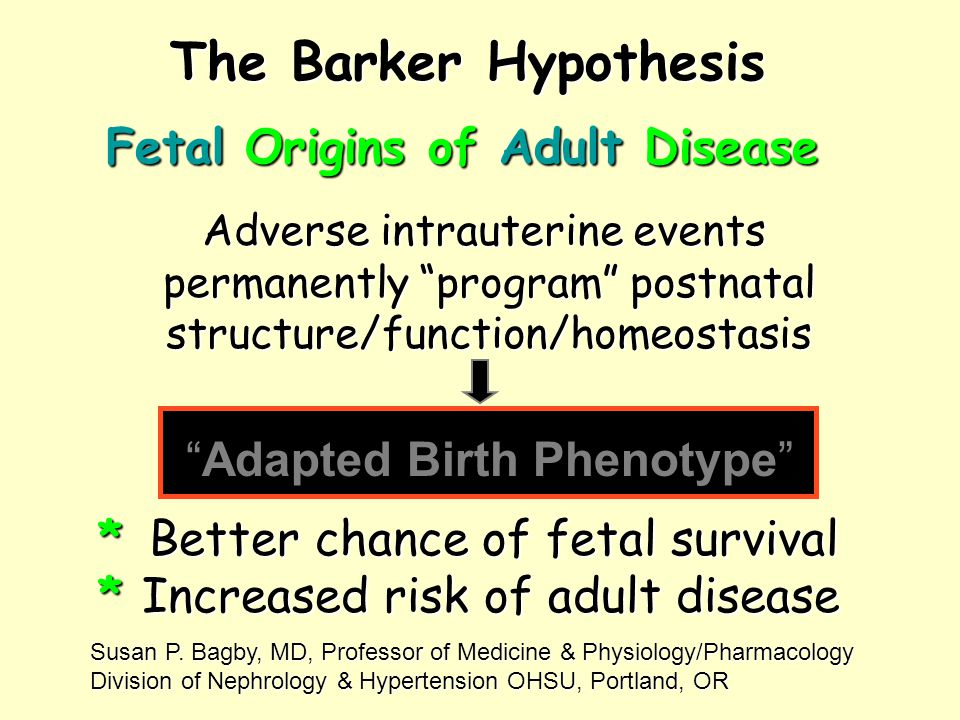 "The Barker Hypothesis Adverse intrauterine events permanently ""program"" postnatal structure/function/homeostasis Fetal Origins of Adult Disease * Bett"