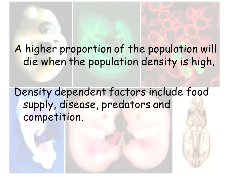 A higher proportion of the population will die when the population density is high. Density dependent factors include food supply, disease, predators