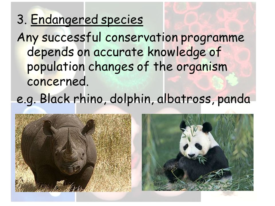 3. Endangered species Any successful conservation programme depends on accurate knowledge of population changes of the organism concerned. e.g. Black