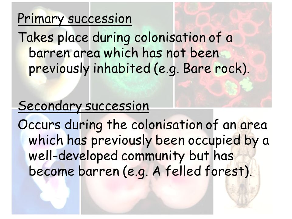 Primary succession Takes place during colonisation of a barren area which has not been previously inhabited (e.g. Bare rock). Secondary succession Occ