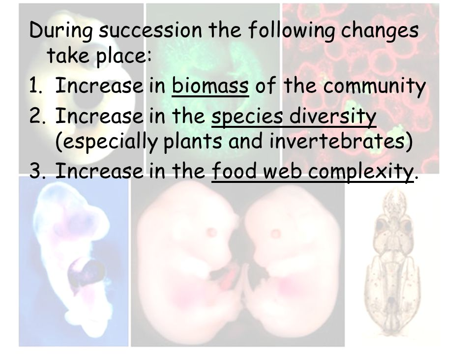 During succession the following changes take place: 1.Increase in biomass of the community 2.Increase in the species diversity (especially plants and