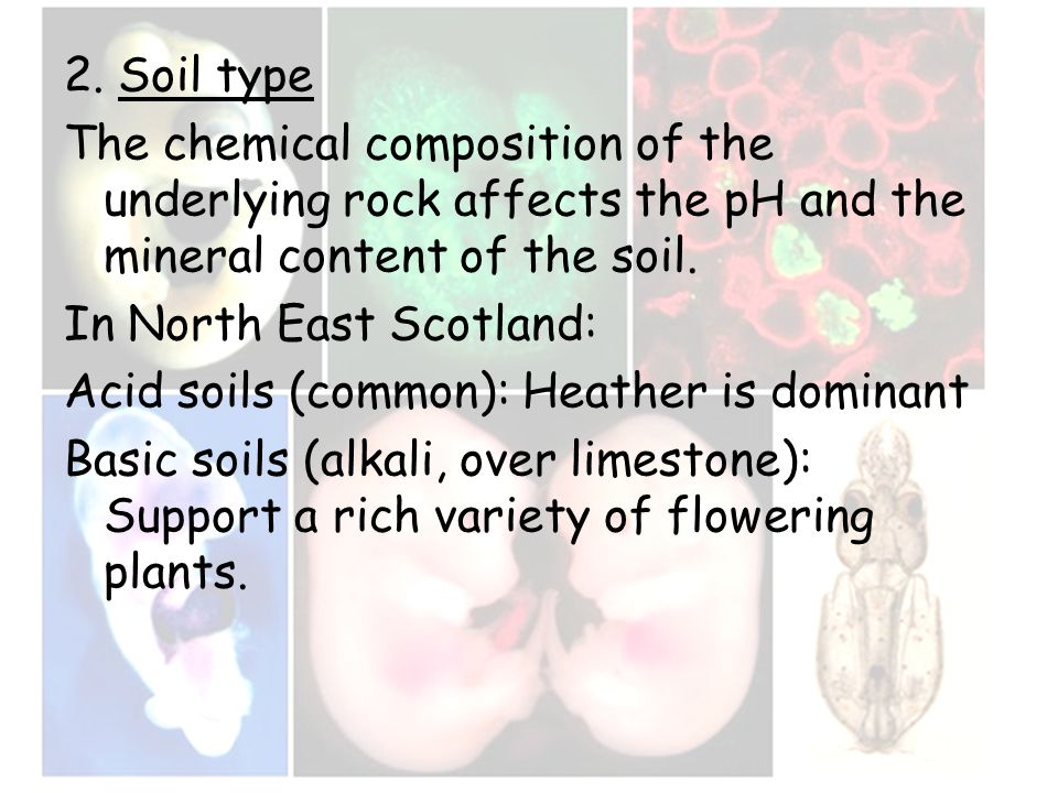2. Soil type The chemical composition of the underlying rock affects the pH and the mineral content of the soil. In North East Scotland: Acid soils (c