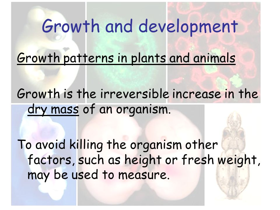 Growth and development Growth patterns in plants and animals Growth is the irreversible increase in the dry mass of an organism. To avoid killing the