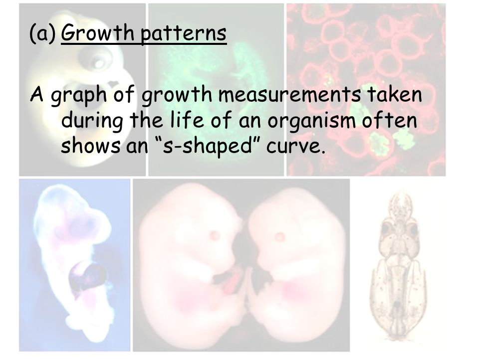 "(a)Growth patterns A graph of growth measurements taken during the life of an organism often shows an ""s-shaped"" curve."