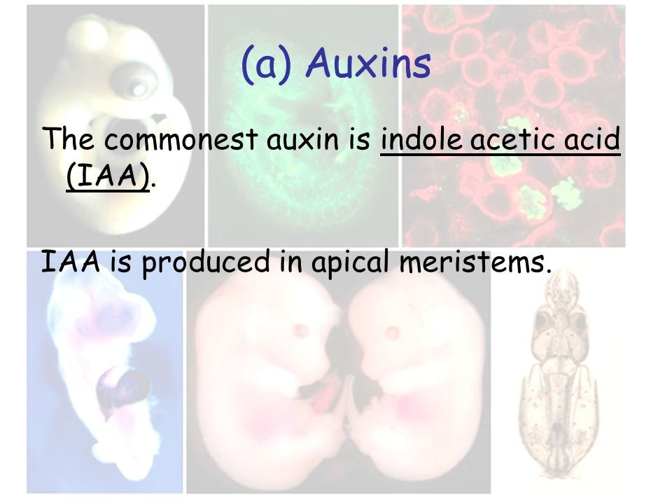 (a) Auxins The commonest auxin is indole acetic acid (IAA). IAA is produced in apical meristems.