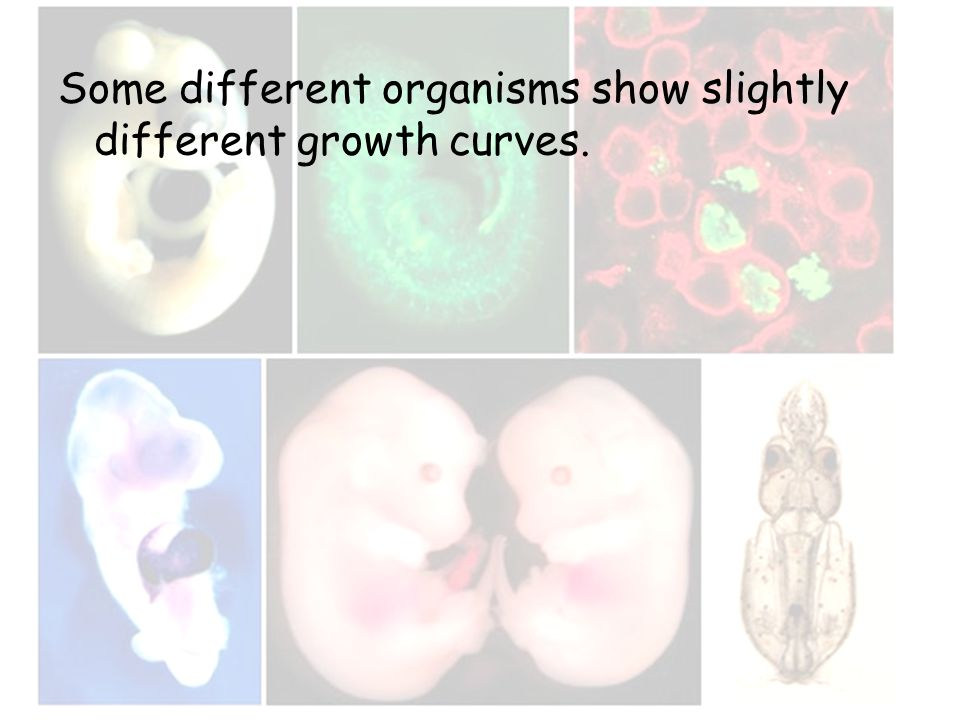 Some different organisms show slightly different growth curves.