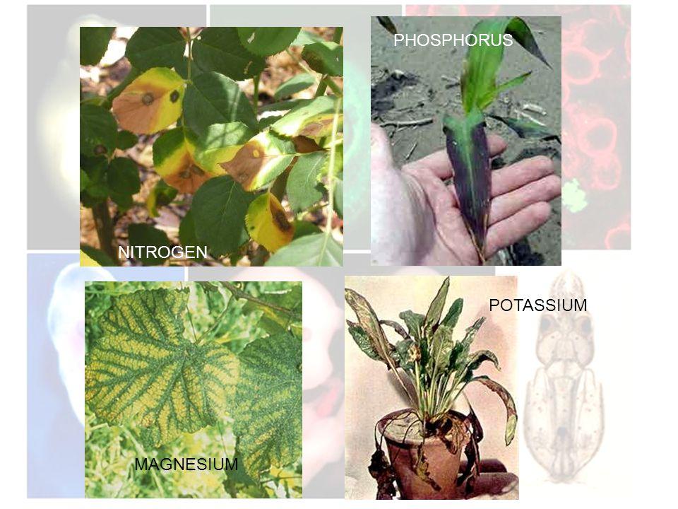 NITROGEN PHOSPHORUS MAGNESIUM POTASSIUM