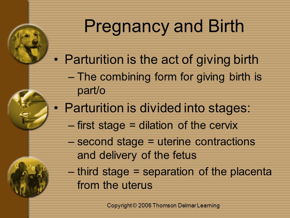 Copyright © 2006 Thomson Delmar Learning Pregnancy and Birth Parturition is the act of giving birth –The combining form for giving birth is part/o Parturition is divided into stages: –first stage = dilation of the cervix –second stage = uterine contractions and delivery of the fetus –third stage = separation of the placenta from the uterus
