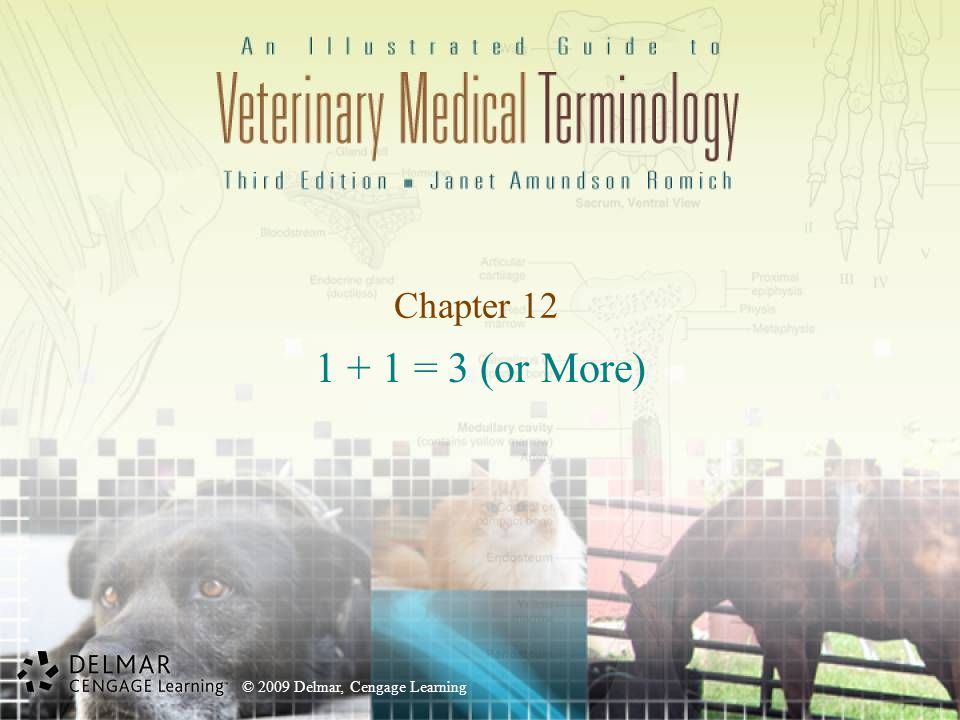 © 2009 Delmar, Cengage Learning Spay/ Neuter Surgeries Spay (Ovariohysterectomy) –Ovari/o = ovary –Hyster/o = uterus –https://www.youtube.com/watch?v=scxfdiruTTwhttps://www.youtube.com/watch?v=scxfdiruTTw Watch starting at 7 minutes ( https://www.youtube.com/watch?v=tWKuDbXZm5E)( https://www.youtube.com/watch?v=tWKuDbXZm5E Neuter https://www.youtube.com/watch?v=C6OS7jKA5Dc