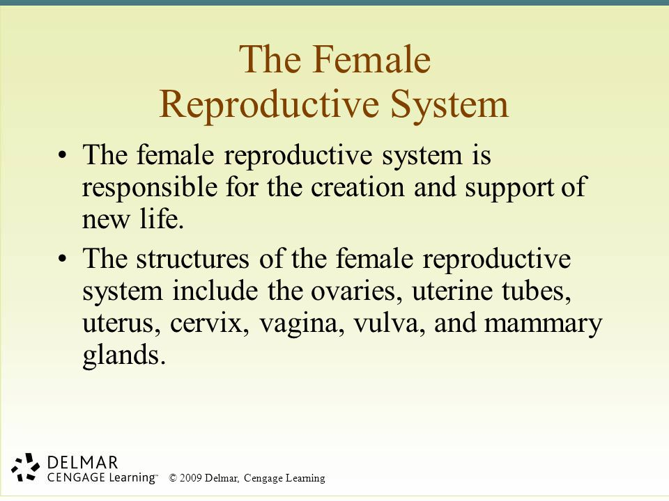 The Female Reproductive System The female reproductive system is responsible for the creation and support of new life. The structures of the female re