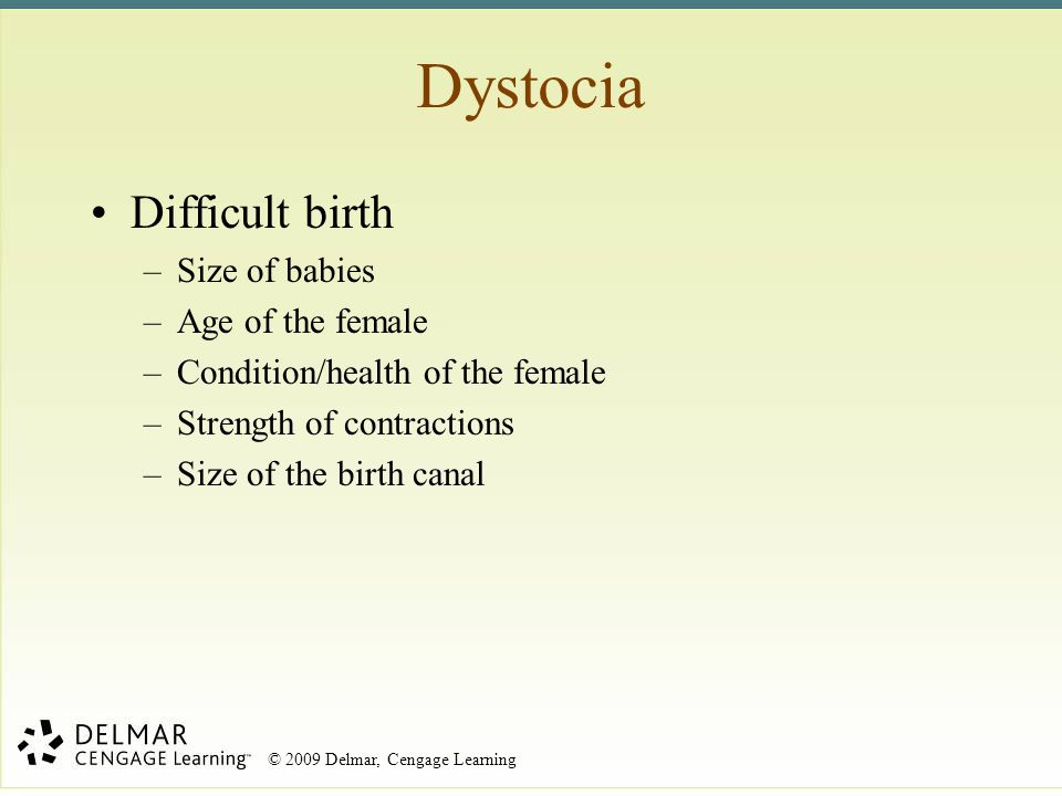 © 2009 Delmar, Cengage Learning Dystocia Difficult birth –Size of babies –Age of the female –Condition/health of the female –Strength of contractions