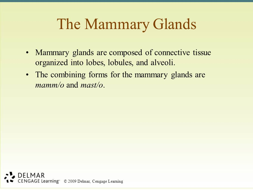 © 2009 Delmar, Cengage Learning Mammary glands are composed of connective tissue organized into lobes, lobules, and alveoli. The combining forms for t
