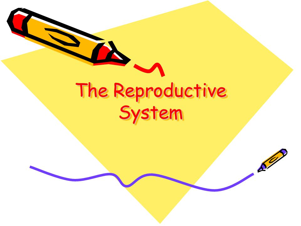 The reproductive glands in the male serve to produce fluids that are added to the sperm to form SEMEN.