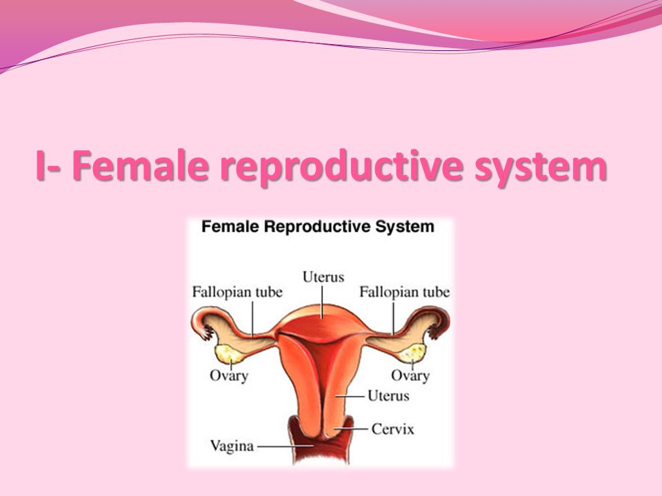I- Female reproductive system