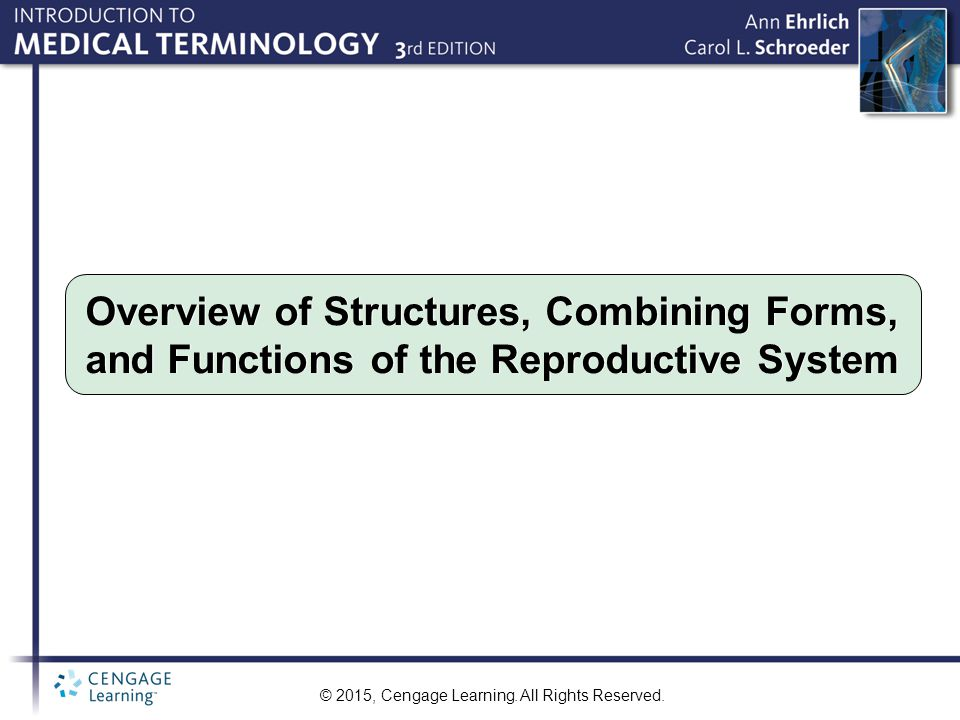 © 2015, Cengage Learning. All Rights Reserved. Overview of Structures, Combining Forms, and Functions of the Reproductive System
