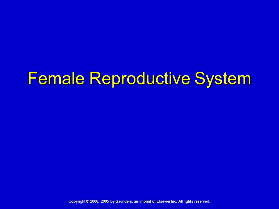 Female Reproductive System Copyright © 2008, 2005 by Saunders, an imprint of Elsevier Inc.