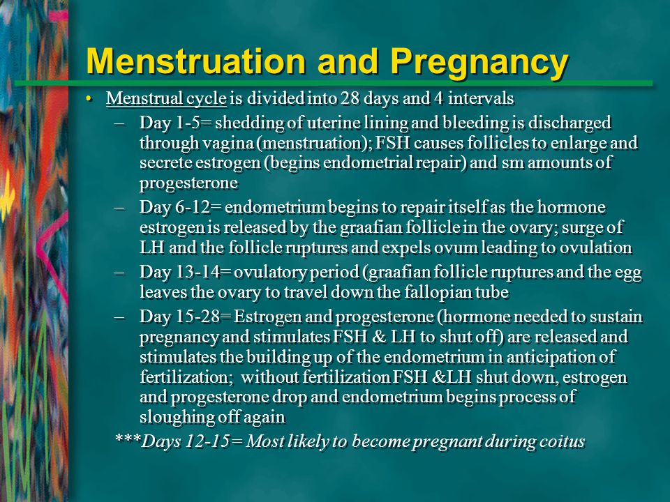 Menstruation and Pregnancy Menstrual cycle is divided into 28 days and 4 intervals –Day 1-5= shedding of uterine lining and bleeding is discharged thr