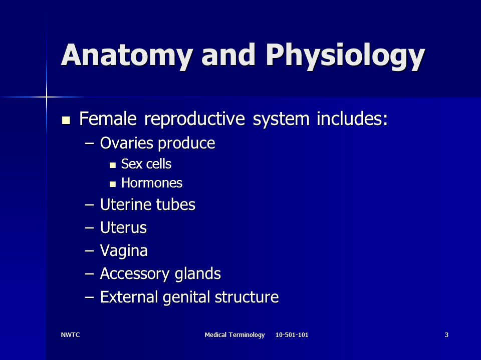 NWTCMedical Terminology 10-501-1013 Anatomy and Physiology Female reproductive system includes: Female reproductive system includes: –Ovaries produce