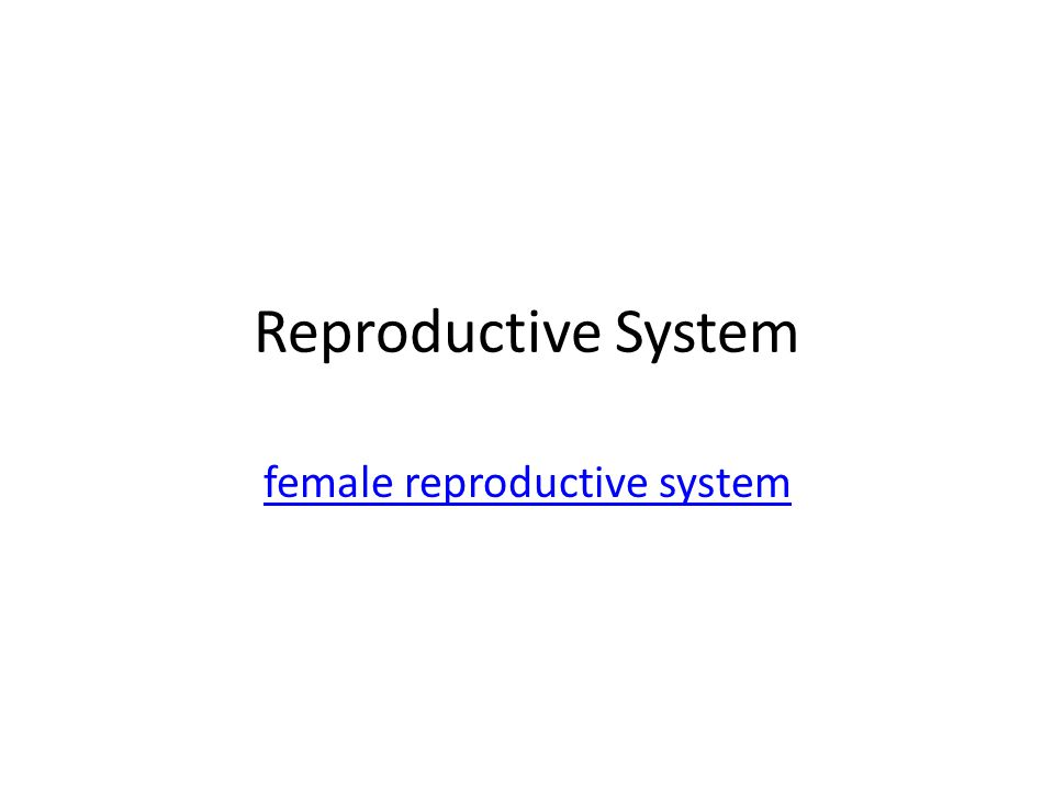 Reproductive System female reproductive system