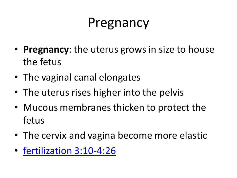 Pregnancy Pregnancy: the uterus grows in size to house the fetus The vaginal canal elongates The uterus rises higher into the pelvis Mucous membranes thicken to protect the fetus The cervix and vagina become more elastic fertilization 3:10-4:26