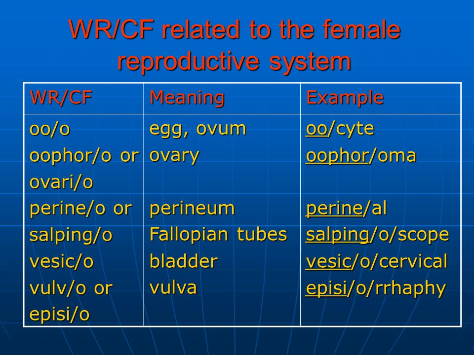 WR/CF related to the female reproductive system ExampleMeaningWR/CF oo/cyte oophor/oma perine/al salping/o/scope vesic/o/cervical episi/o/rrhaphy egg, ovum ovaryperineum Fallopian tubes bladdervulvaoo/o oophor/o or ovari/o perine/o or salping/ovesic/o vulv/o or episi/o
