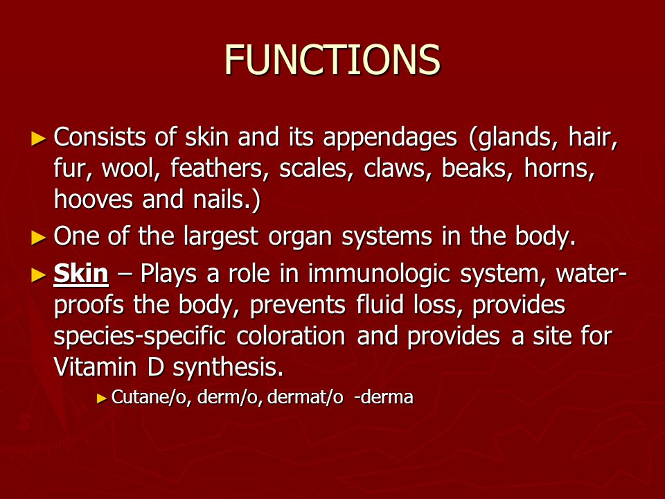 FUNCTIONS ► Consists of skin and its appendages (glands, hair, fur, wool, feathers, scales, claws, beaks, horns, hooves and nails.) ► One of the large