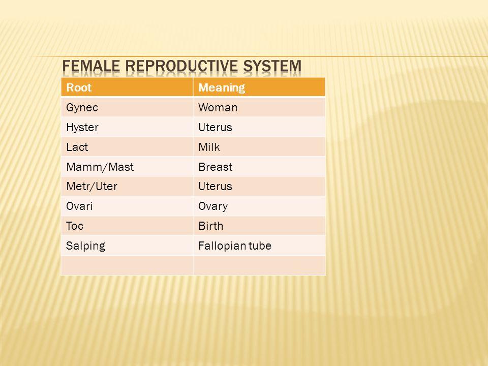 RootMeaning GynecWoman HysterUterus LactMilk Mamm/MastBreast Metr/UterUterus OvariOvary TocBirth SalpingFallopian tube