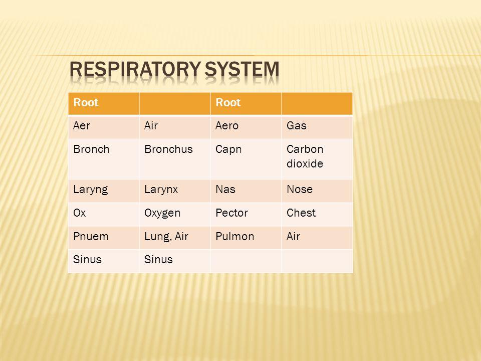 Root AerAirAeroGas BronchBronchusCapnCarbon dioxide LaryngLarynxNasNose OxOxygenPectorChest PnuemLung, AirPulmonAir Sinus