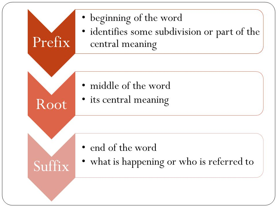 Prefix beginning of the word identifies some subdivision or part of the central meaning Root middle of the word its central meaning Suffix end of the word what is happening or who is referred to