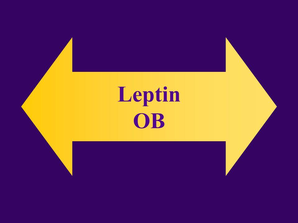 Leptin OB