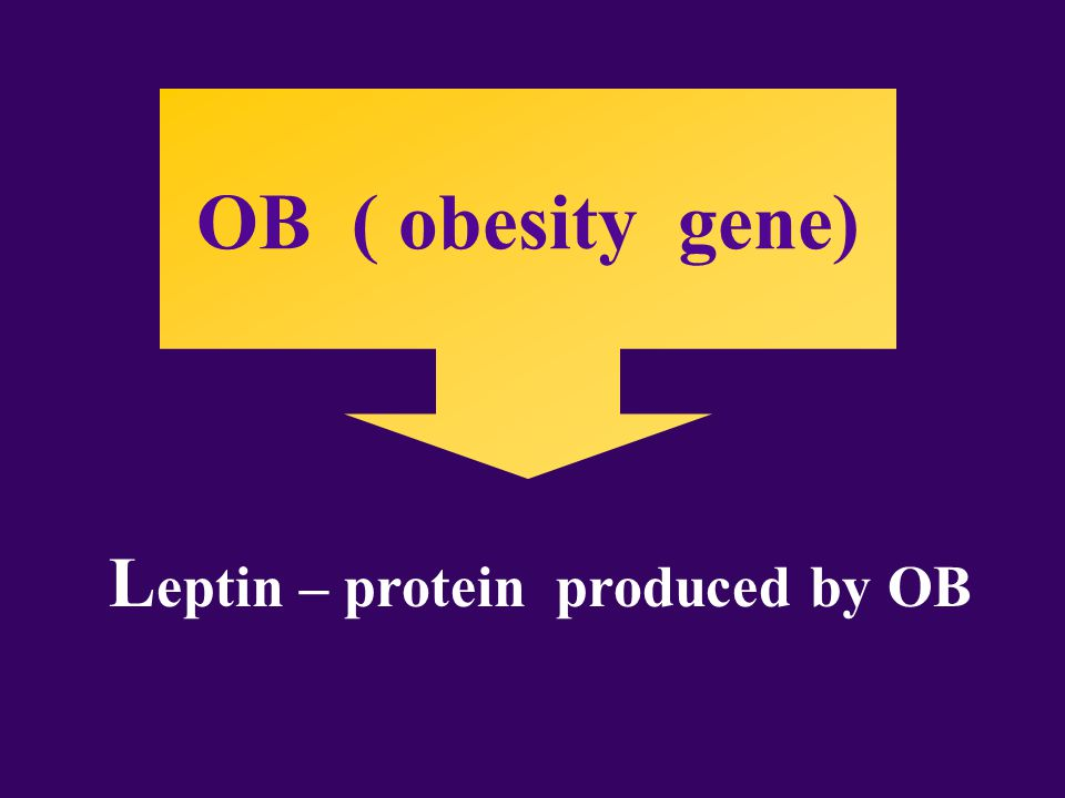 OB ( obesity gene) L eptin – protein produced by OB
