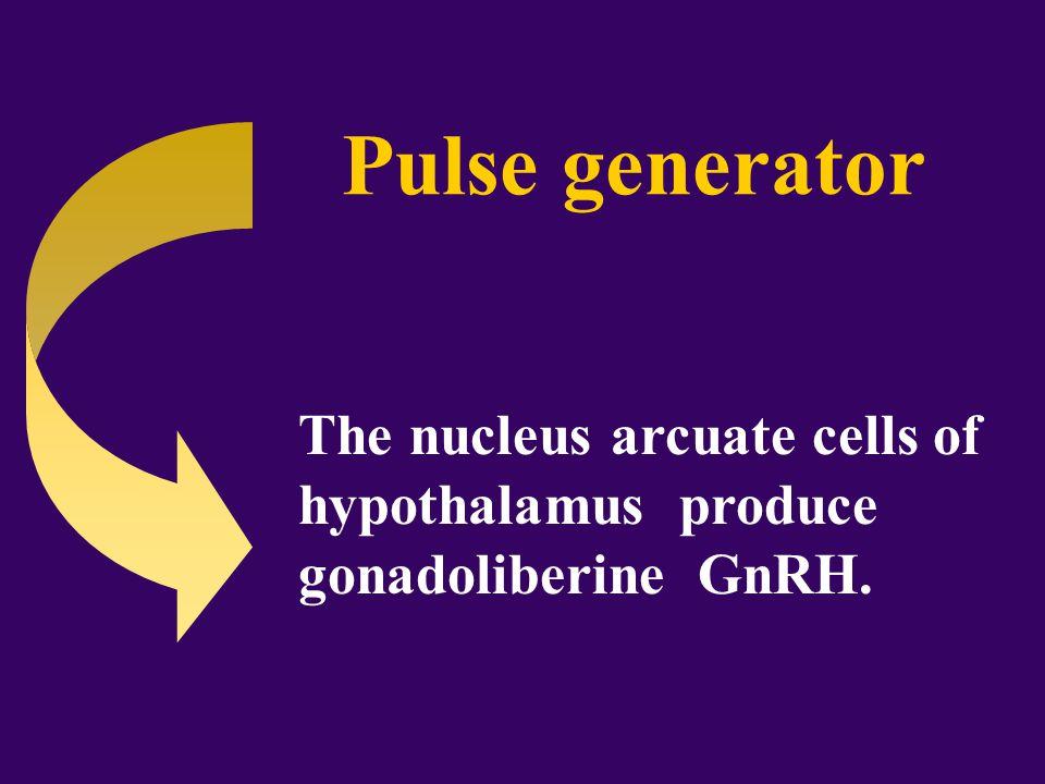 The gonadoliberine is working when it is secreting pulsatingly.